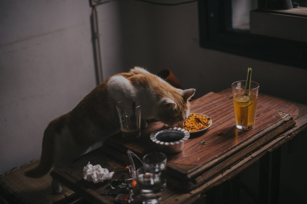animal-animal-photography-ashtray-1846389