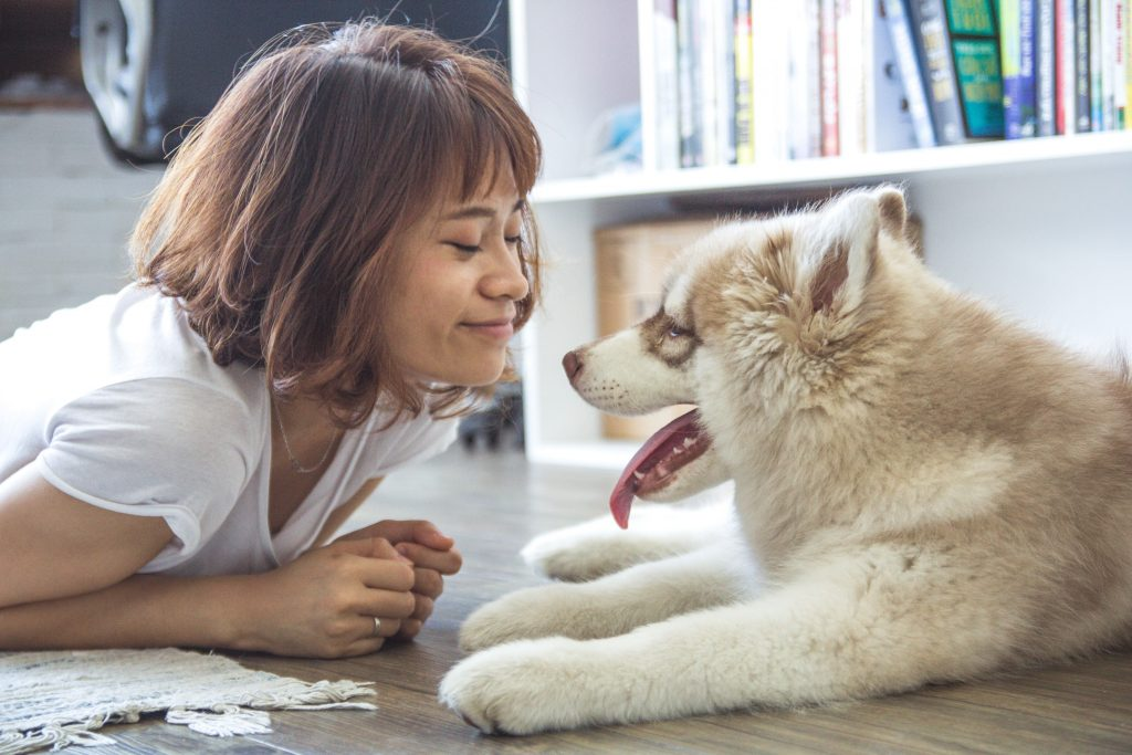 animal-dog-feelings-40064-min