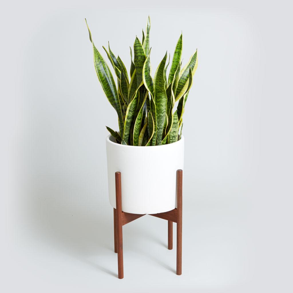 snkae_plant