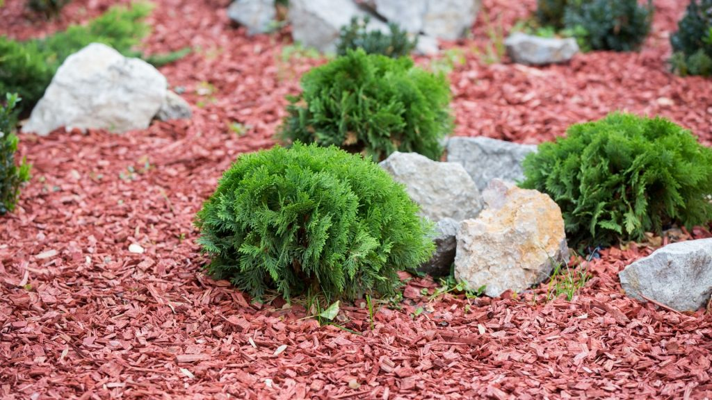 Lawn-less Landscaping (1)